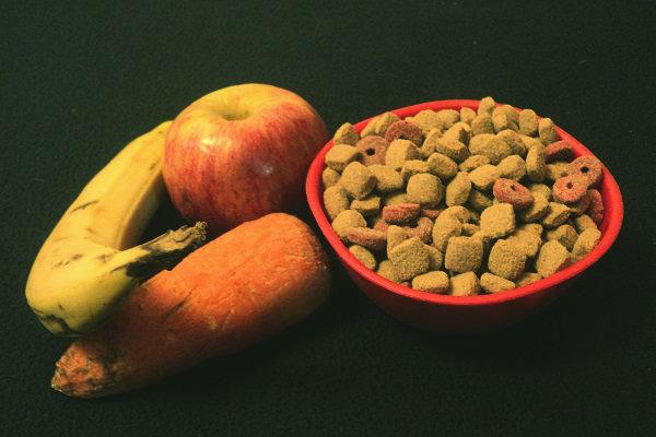 comida casera para poodles