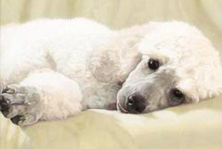 Tipos de convulsión en un perro