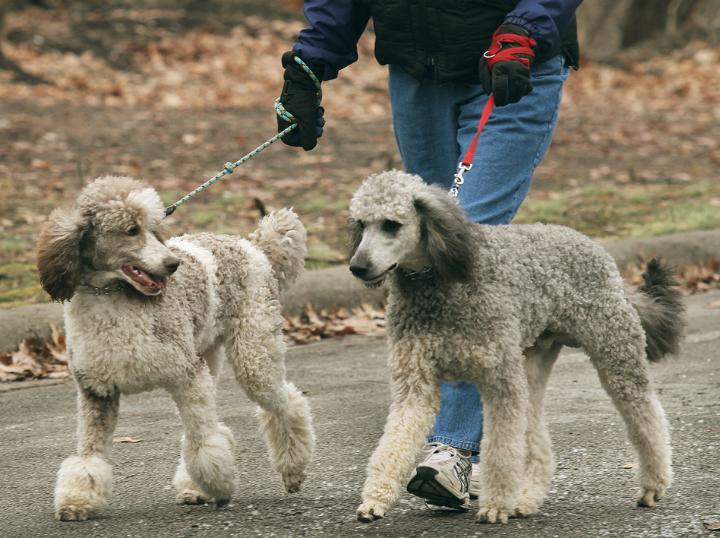Porque debes pasear al perro