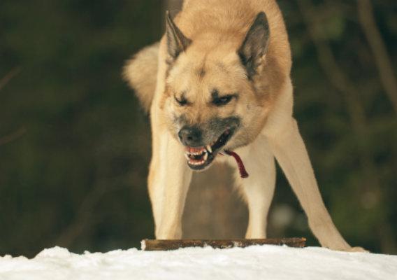Que hacer si mi perro es agresivo