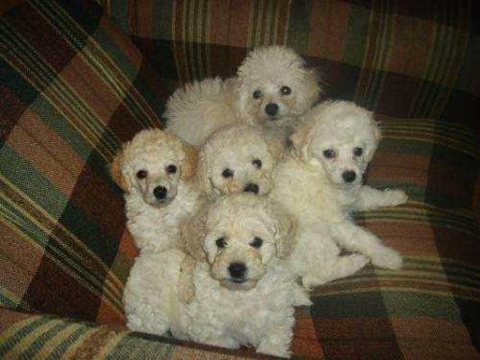 cachorros bien alimentados para una vida adulta sana