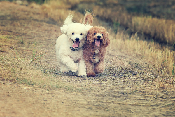 Nuestro perro no debe cavar huecos, pero tampoco debemos prohibirlo