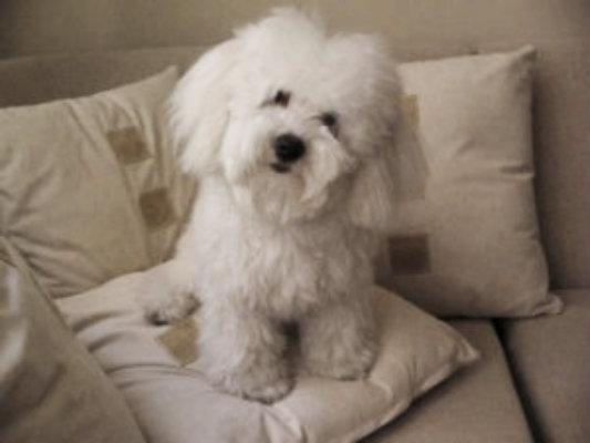 Causas de la convulsión en perros