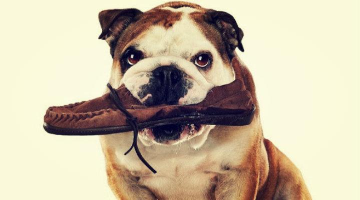 Cuidado con lo que mastica tu perro