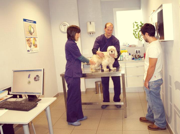 Consulta veterinaria de poodle